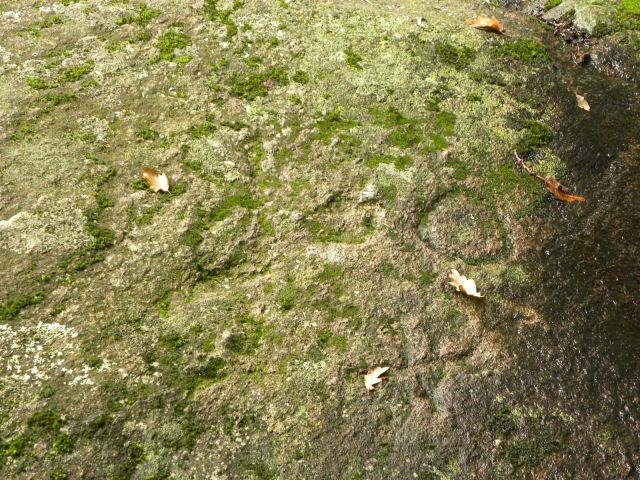 Na kamieniach wyryte symbole w kształcie kół i węża